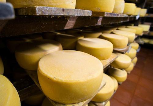 Камеры созревания сыров