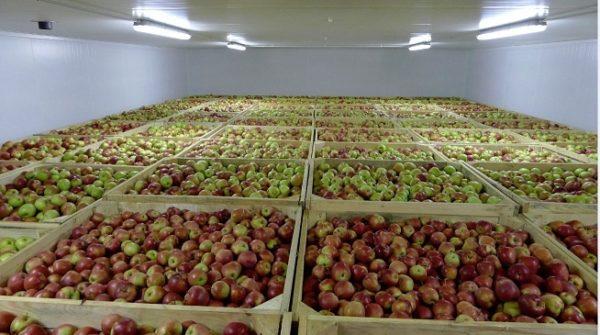 Холодильная камера для хранения фруктов